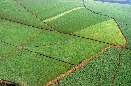Compra de terras por estrangeiros vai à votação no STF